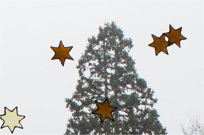 Weihnachtwsbaum und Sterne